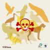 SEO/BirdLife y WWF estiman en unos 185.000 los animales muertos por el uso ilegal del veneno en España